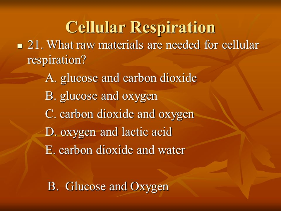 Cellular Respiration 21. What raw materials are needed for cellular respiration A. glucose and carbon dioxide.