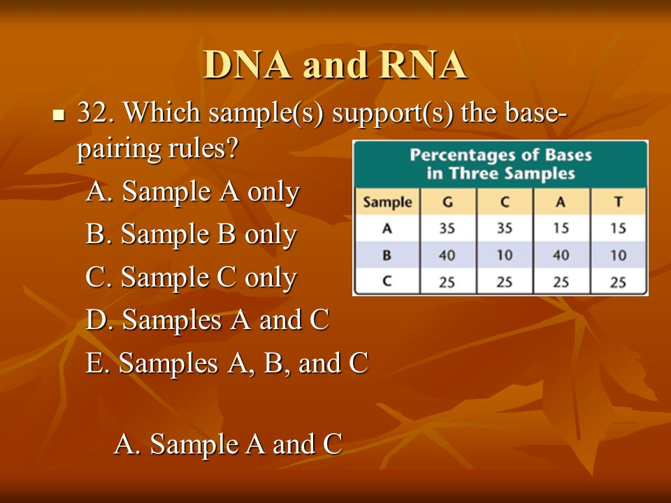 DNA and RNA 32. Which sample(s) support(s) the base-pairing rules