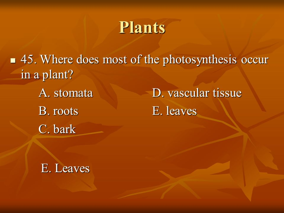 Plants 45. Where does most of the photosynthesis occur in a plant