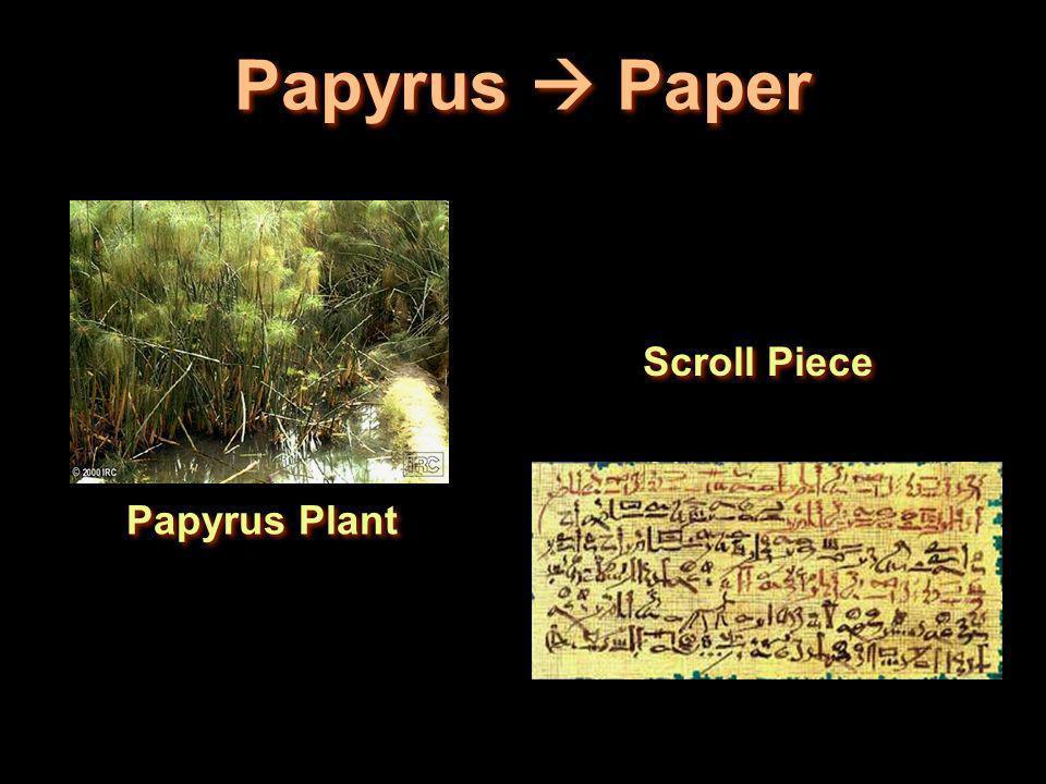 Papyrus  Paper Scroll Piece Papyrus Plant
