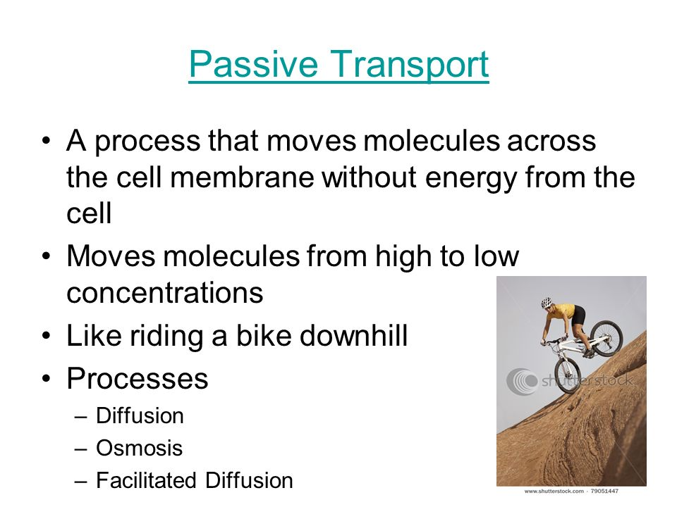 Passive Transport A process that moves molecules across the cell membrane without energy from the cell.