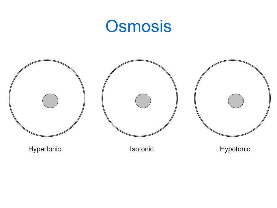 Osmosis Hypertonic Isotonic Hypotonic