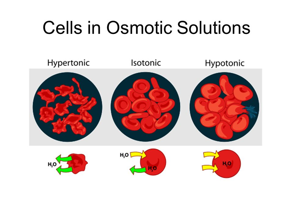 Cells in Osmotic Solutions
