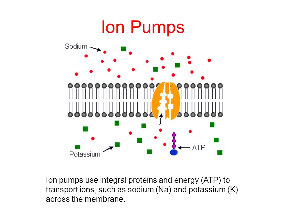 Ion Pumps Ion pumps use integral proteins and energy (ATP) to transport ions, such as sodium (Na) and potassium (K) across the membrane.
