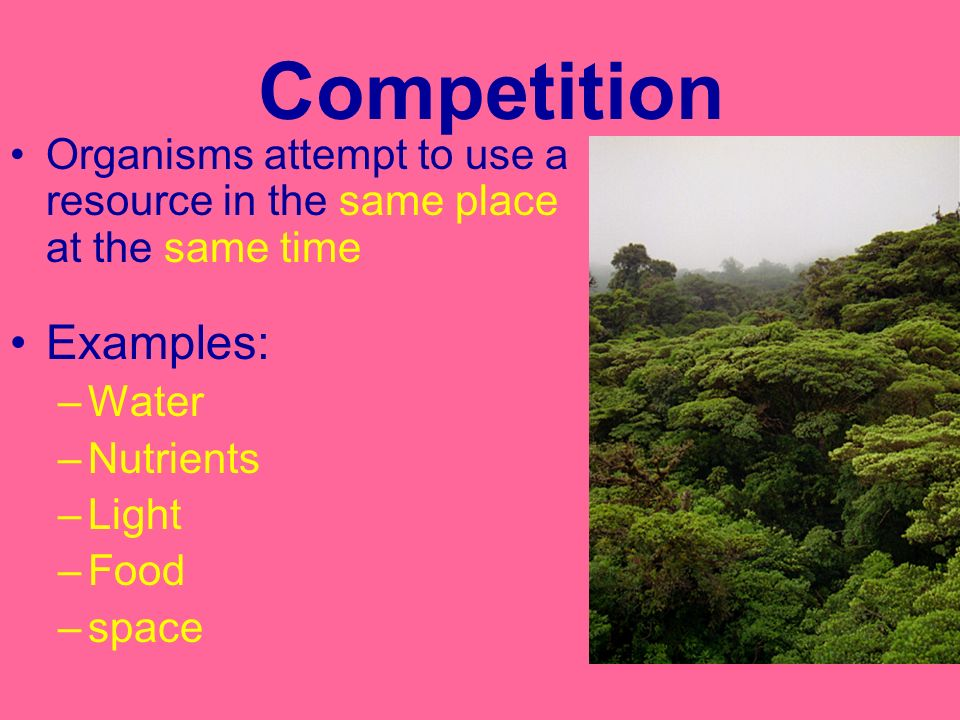 Competition Examples: