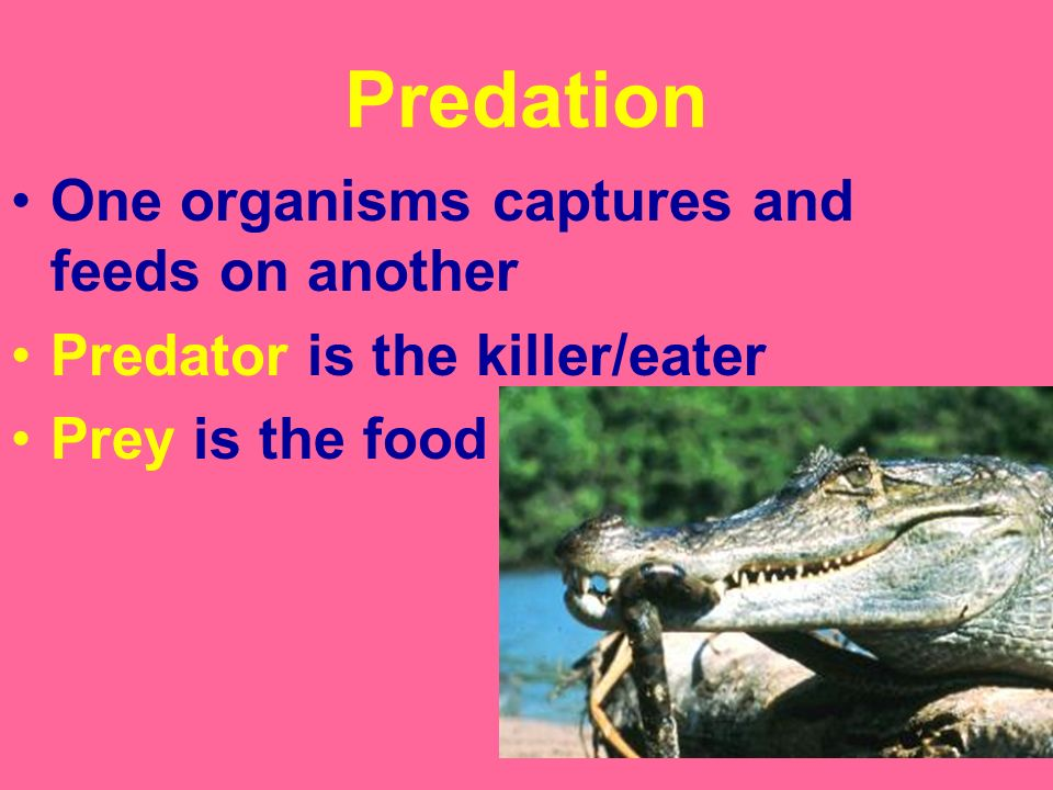 Predation One organisms captures and feeds on another