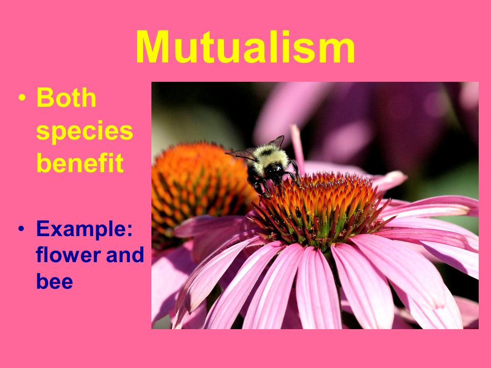Mutualism Both species benefit Example: flower and bee