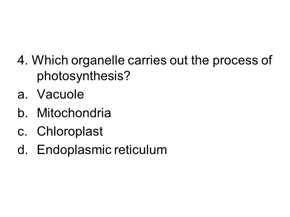 4. Which organelle carries out the process of photosynthesis