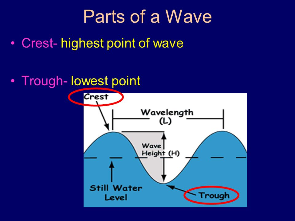 Parts of a Wave Crest- highest point of wave Trough- lowest point