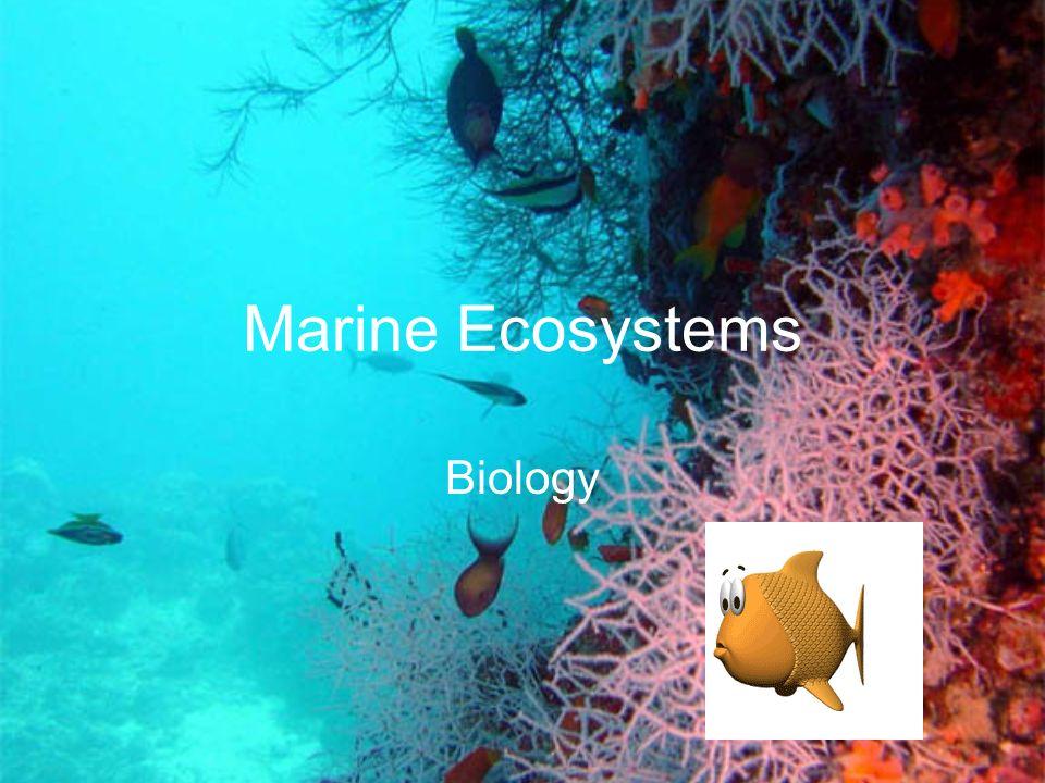 Marine Ecosystems Biology