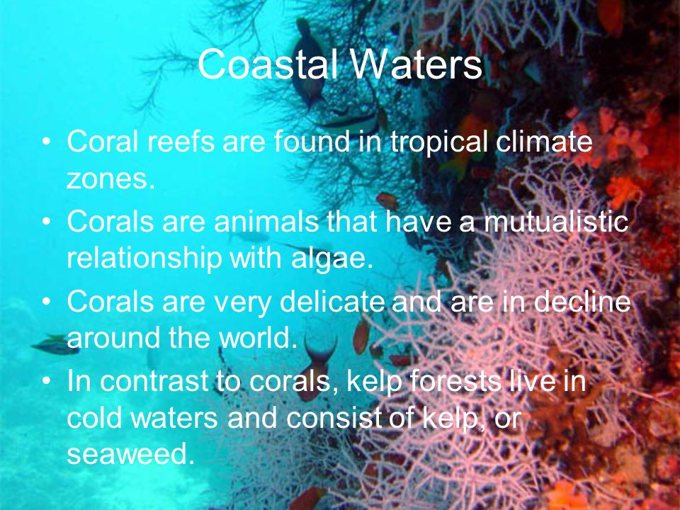 Coastal Waters Coral reefs are found in tropical climate zones.