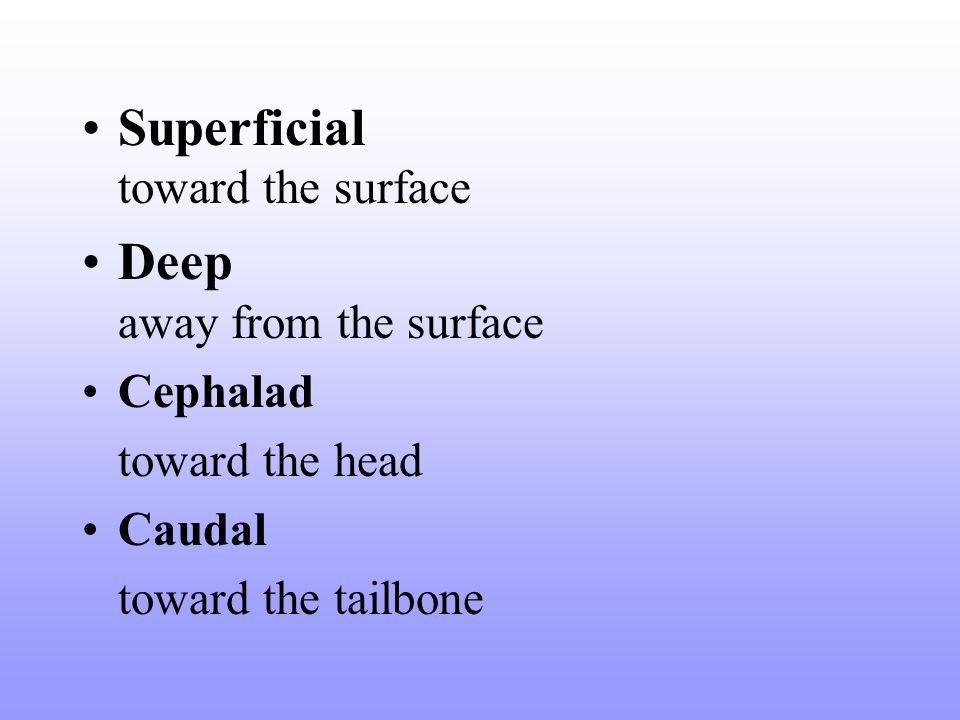 Superficial toward the surface Deep away from the surface