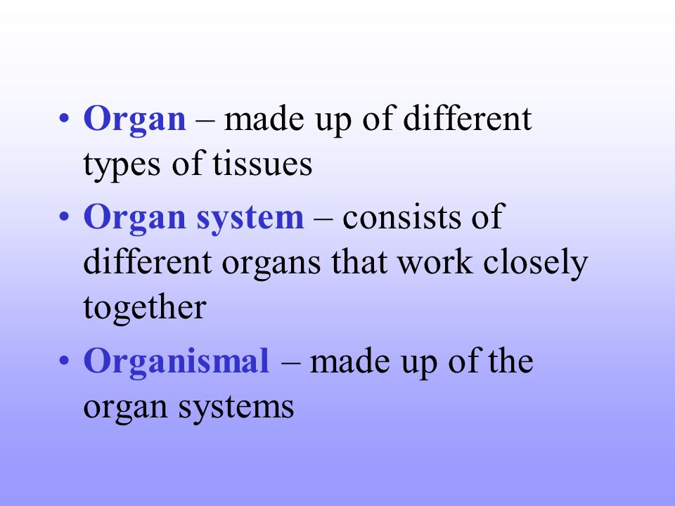 Organ – made up of different types of tissues