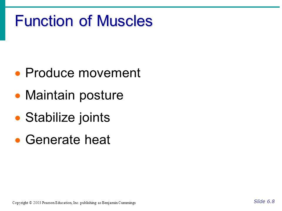 Function of Muscles Produce movement Maintain posture Stabilize joints