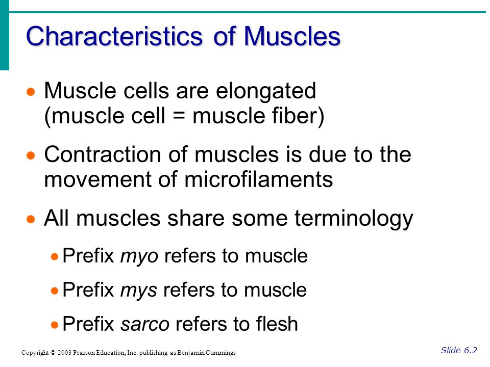 Characteristics of Muscles
