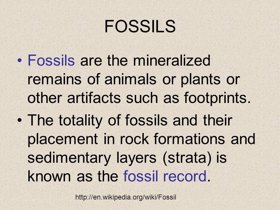 FOSSILS Fossils are the mineralized remains of animals or plants or other artifacts such as footprints.