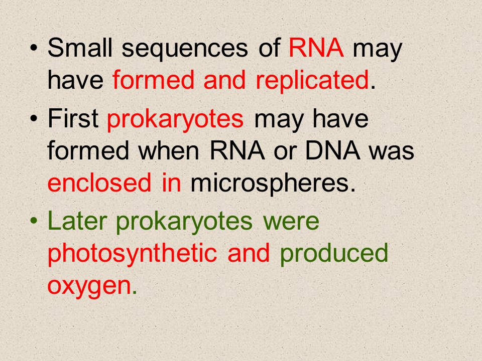 Small sequences of RNA may have formed and replicated.