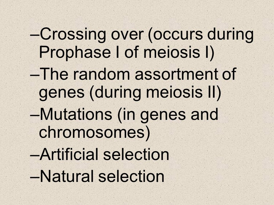 Crossing over (occurs during Prophase I of meiosis I)