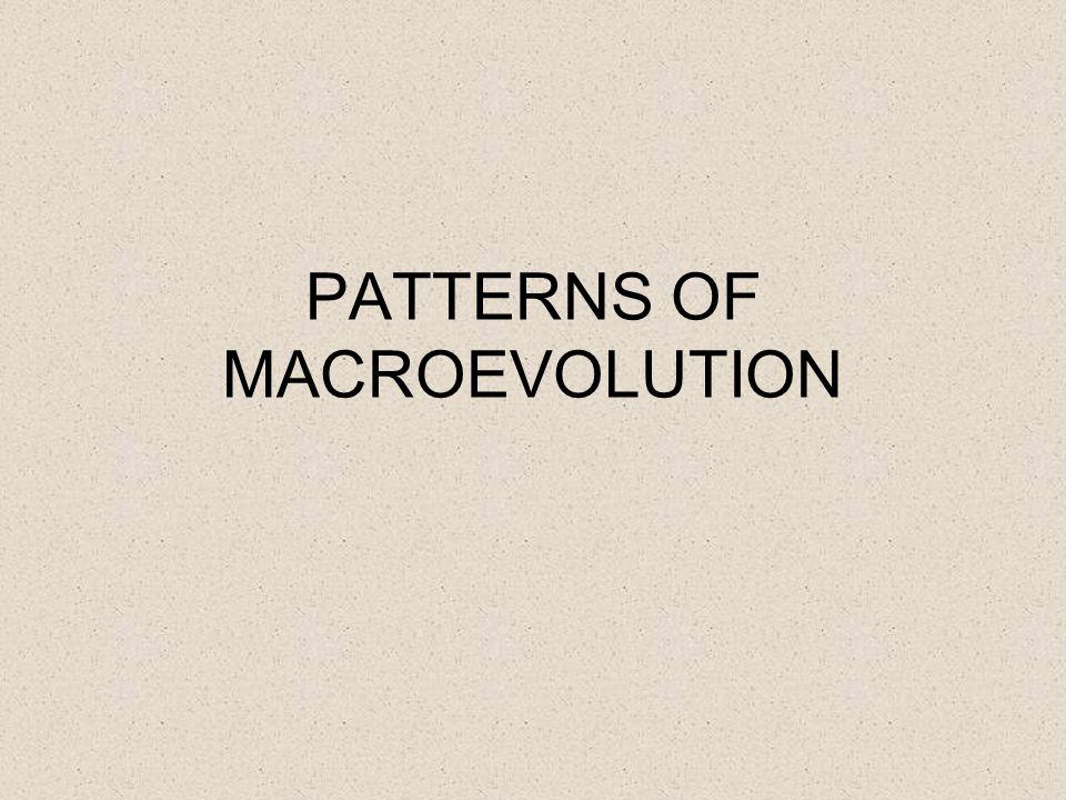 PATTERNS OF MACROEVOLUTION
