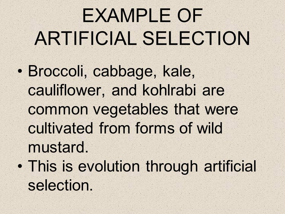 EXAMPLE OF ARTIFICIAL SELECTION