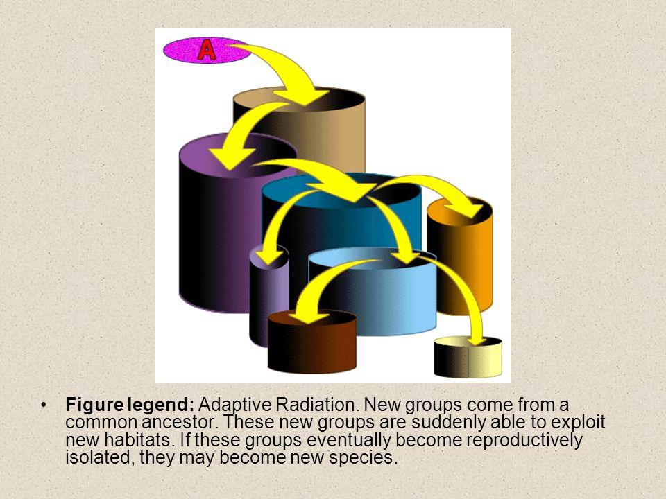 Figure legend: Adaptive Radiation