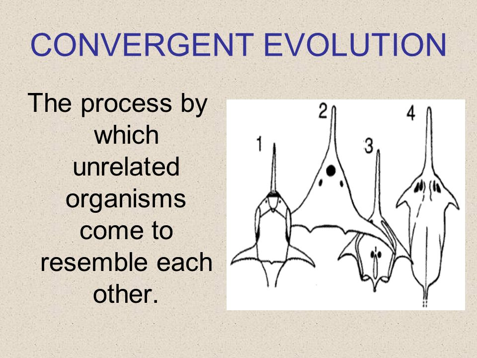 The process by which unrelated organisms come to resemble each other.