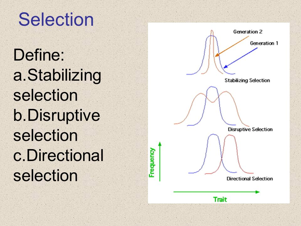 Selection Define: Stabilizing selection Disruptive selection