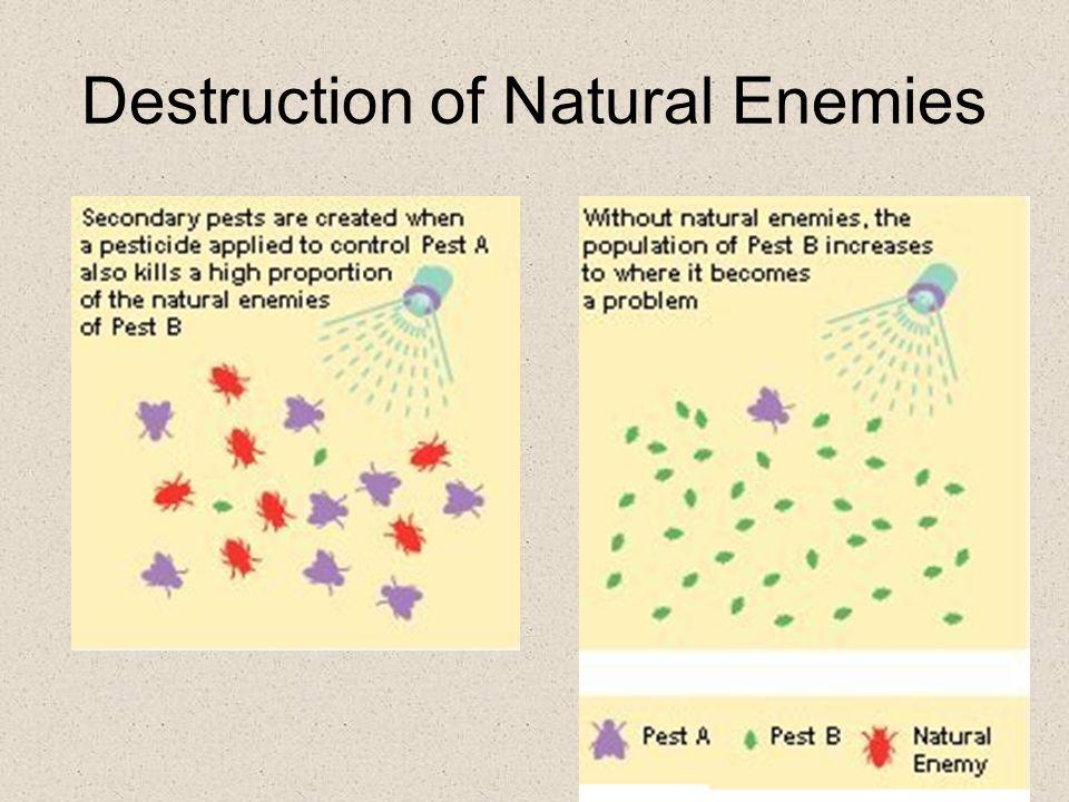 Destruction of Natural Enemies