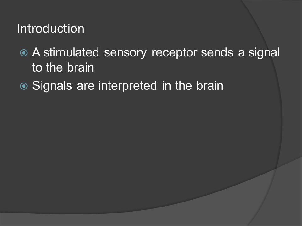 Introduction A stimulated sensory receptor sends a signal to the brain