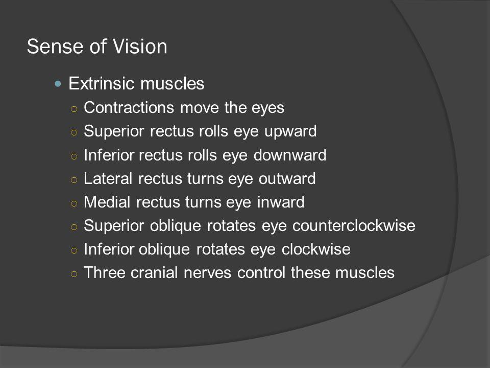 Sense of Vision Extrinsic muscles Contractions move the eyes
