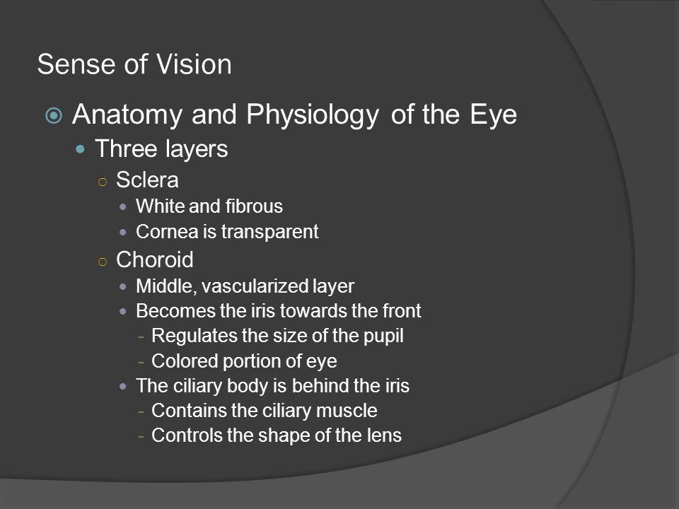 Sense of Vision Anatomy and Physiology of the Eye Three layers Sclera
