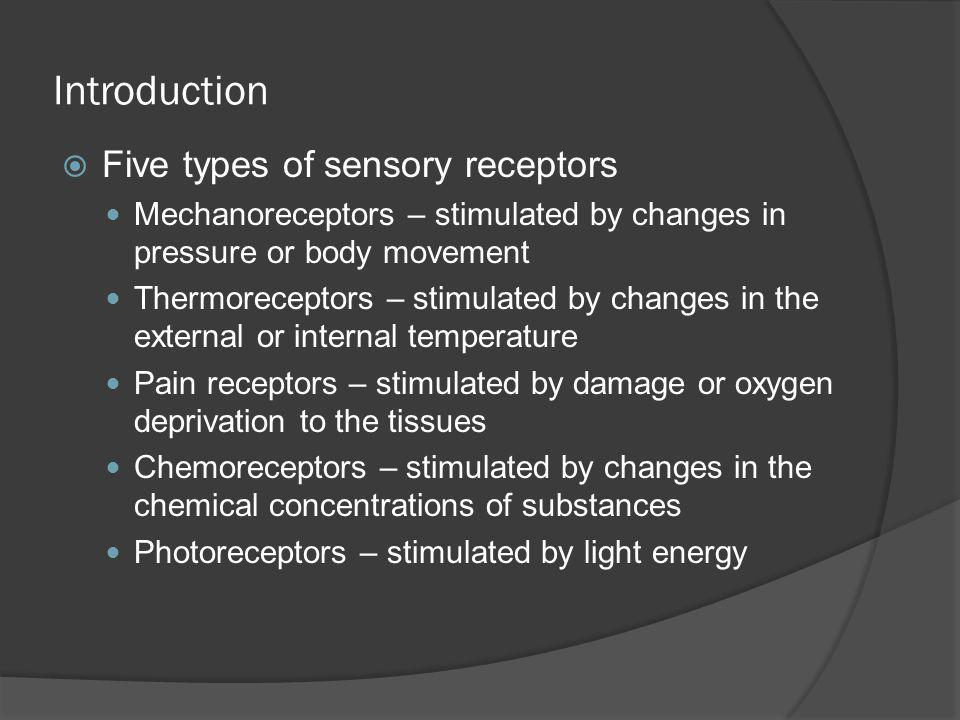 Introduction Five types of sensory receptors