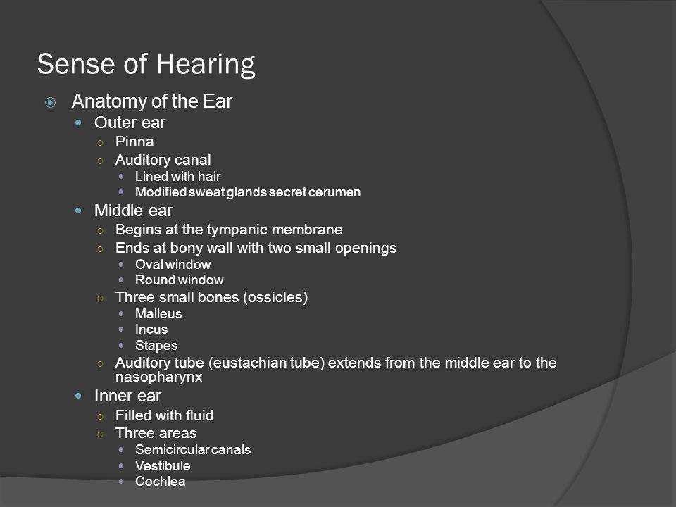 Sense of Hearing Anatomy of the Ear Outer ear Middle ear Inner ear