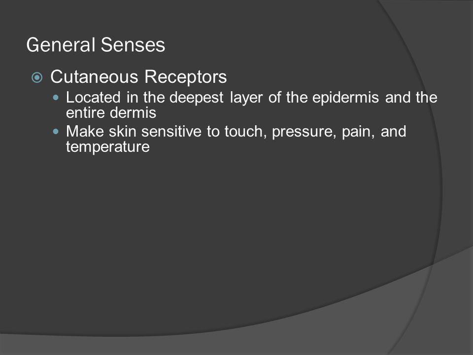 General Senses Cutaneous Receptors