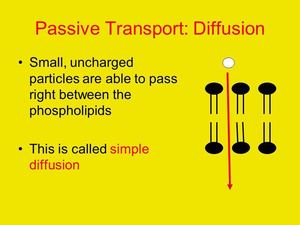 Passive Transport: Diffusion