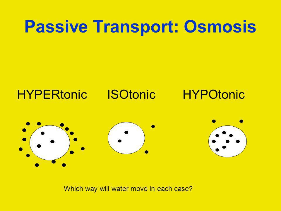 Passive Transport: Osmosis