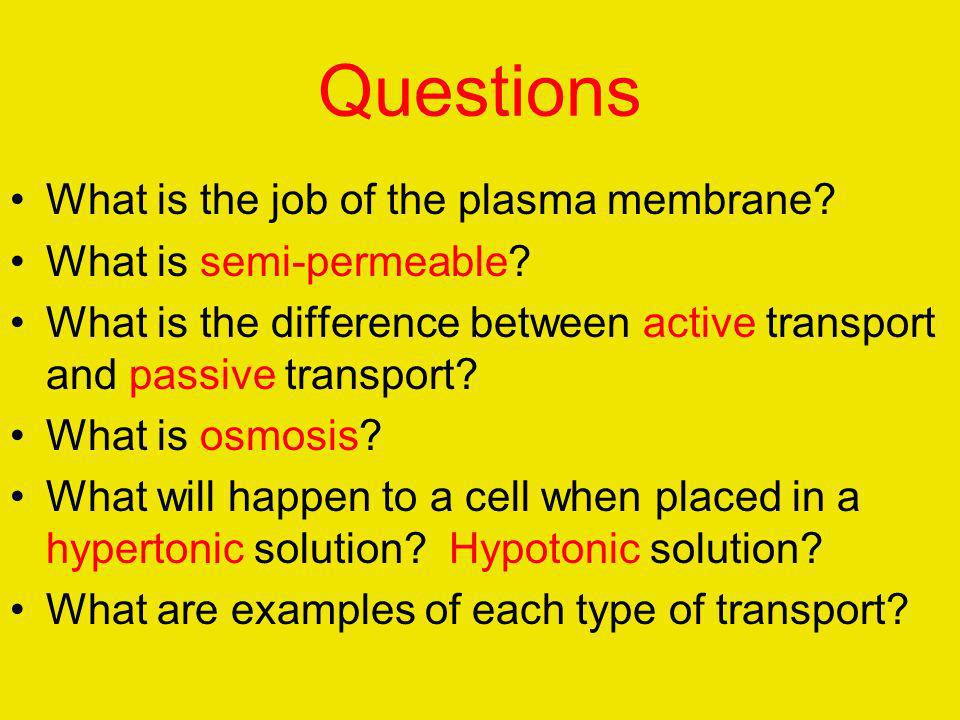 Questions What is the job of the plasma membrane
