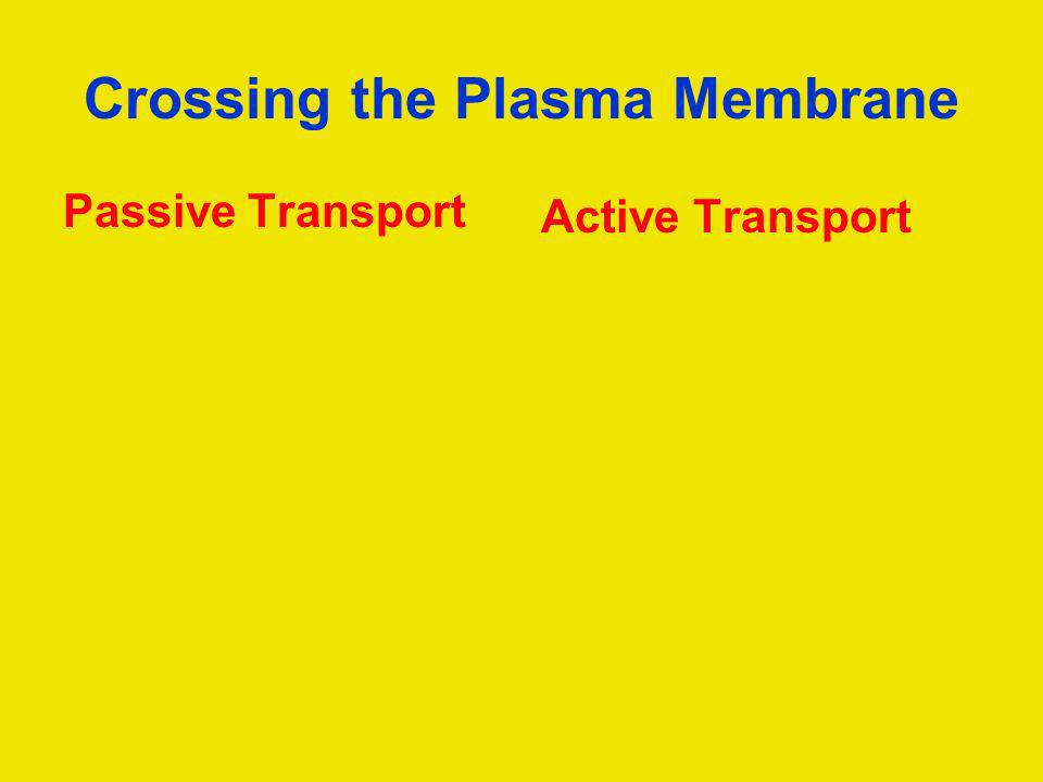 Crossing the Plasma Membrane