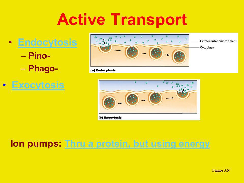Active Transport Endocytosis Exocytosis