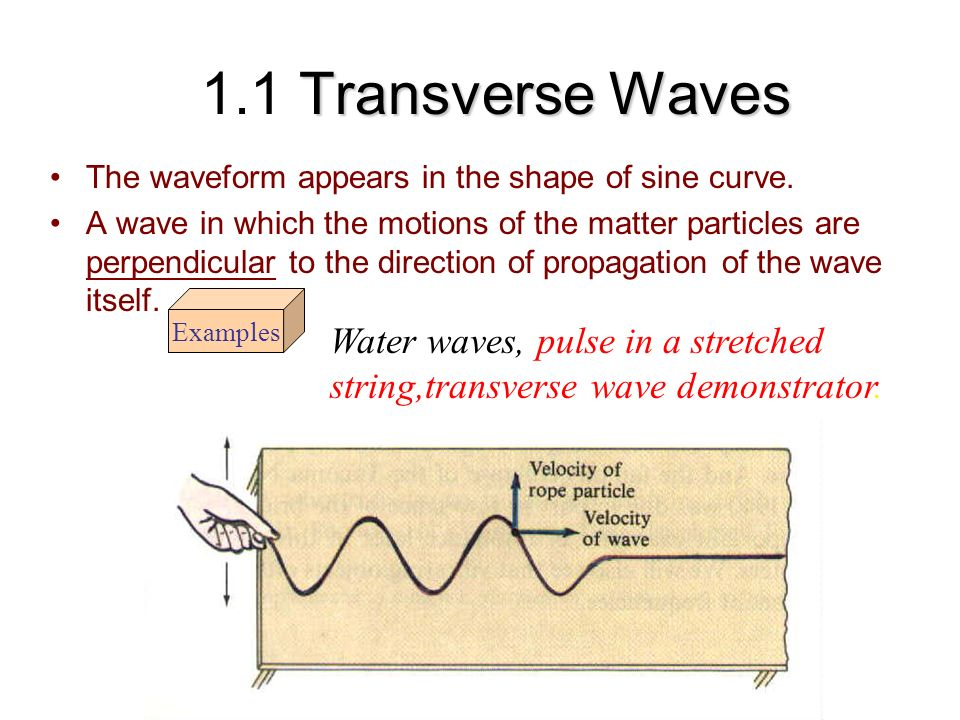 1.1 Transverse Waves The waveform appears in the shape of sine curve.