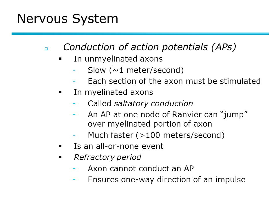 Nervous System Conduction of action potentials (APs)