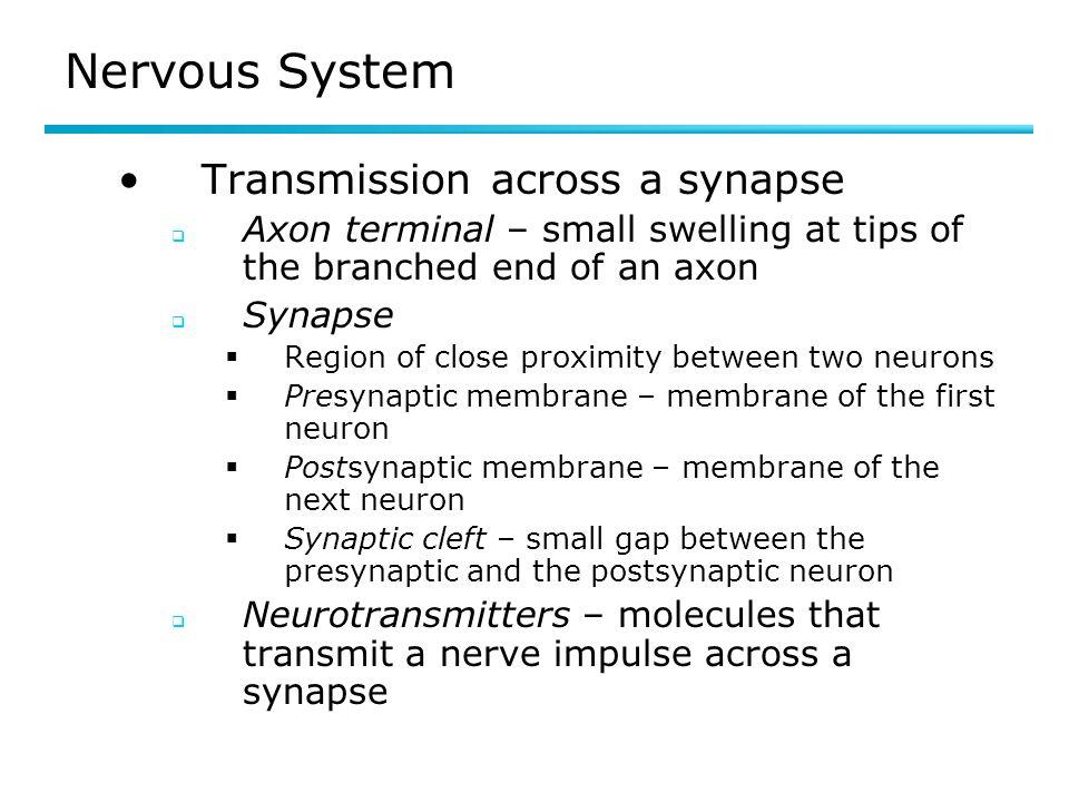 Nervous System Transmission across a synapse