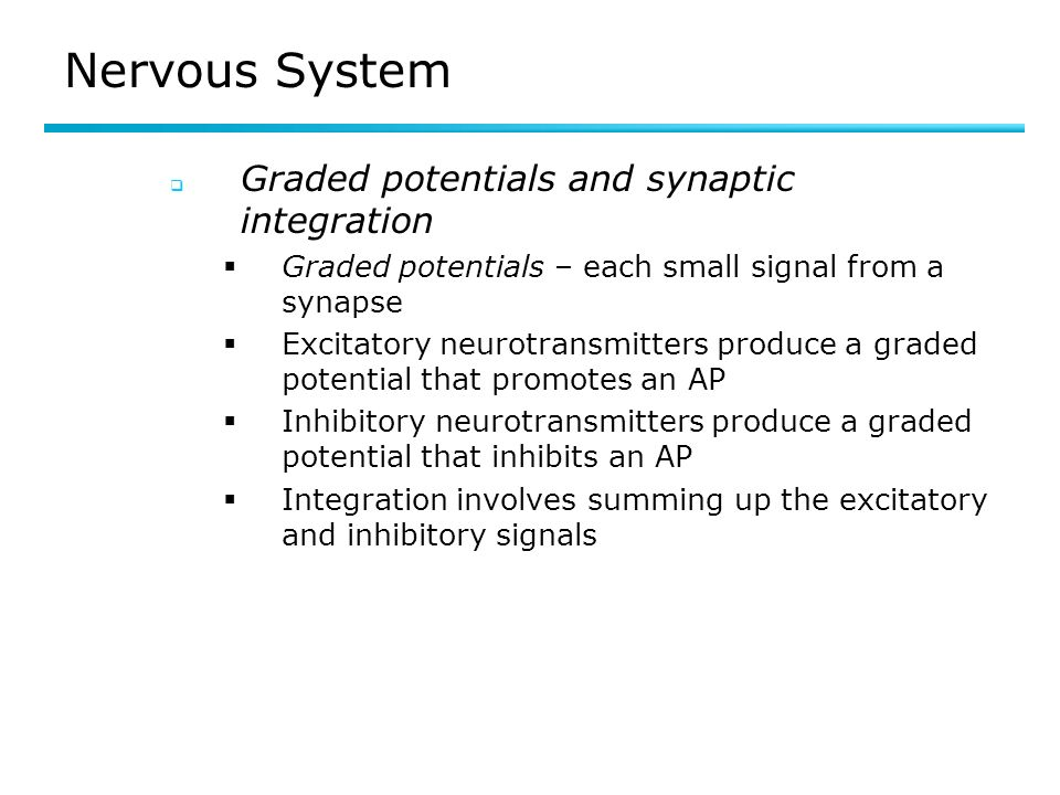 Nervous System Graded potentials and synaptic integration