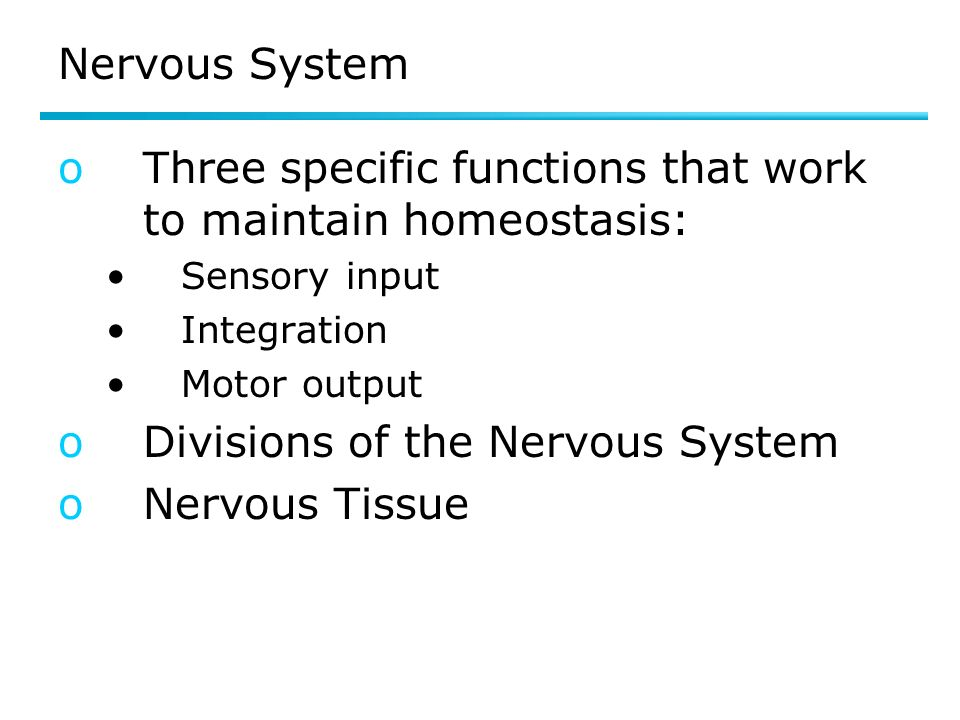 Three specific functions that work to maintain homeostasis: