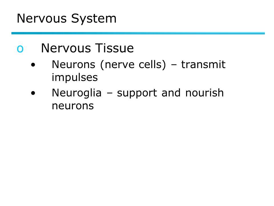 Nervous System Nervous Tissue
