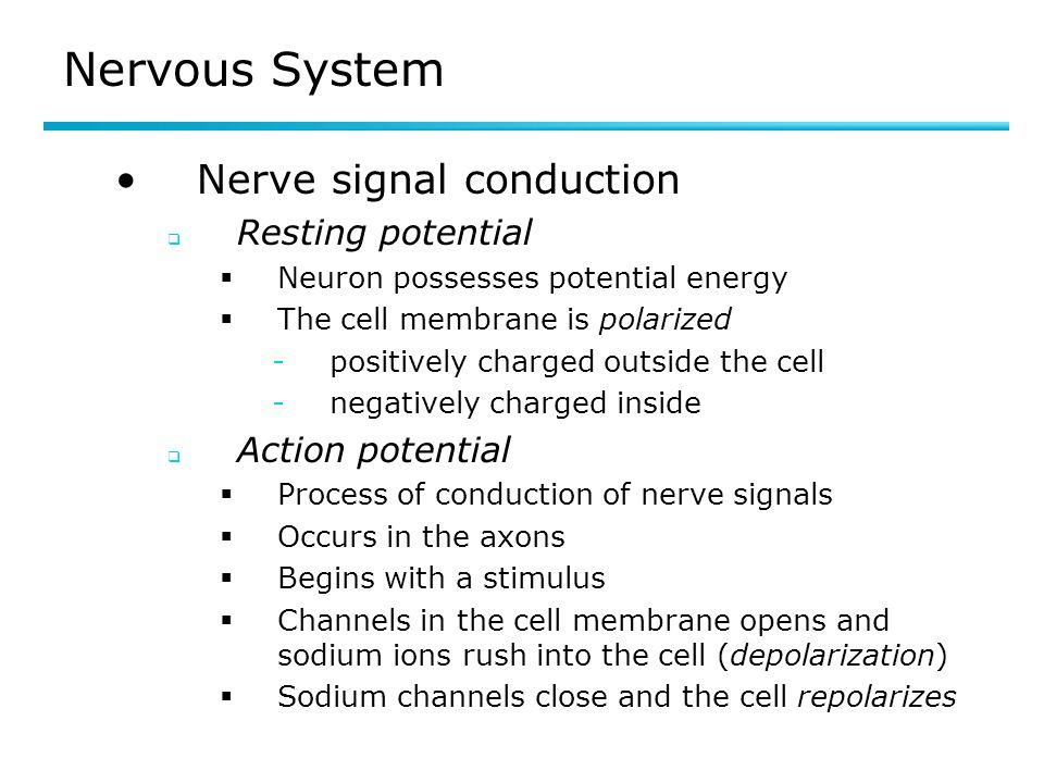 Nervous System Nerve signal conduction Resting potential