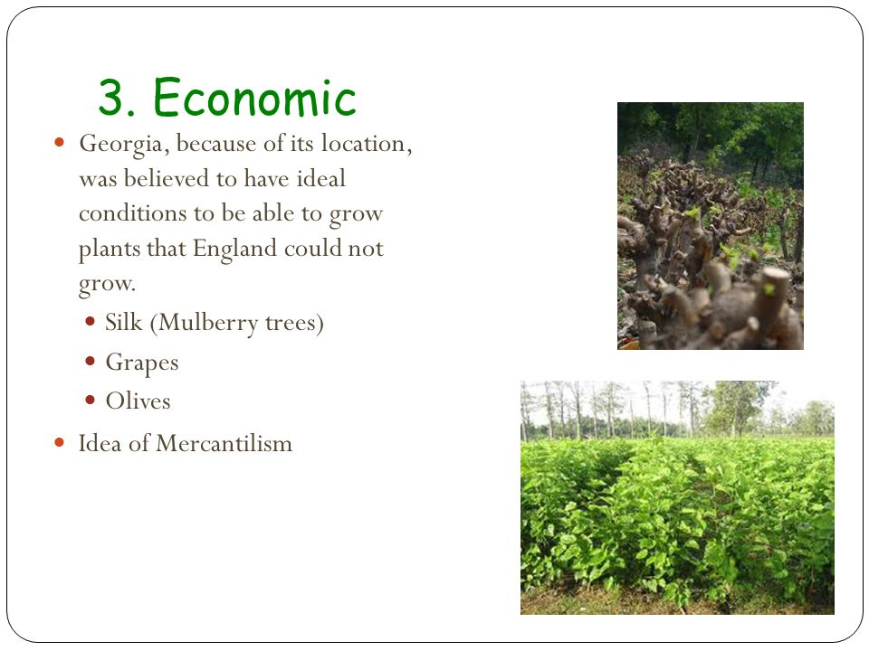 3. Economic Georgia, because of its location, was believed to have ideal conditions to be able to grow plants that England could not grow.