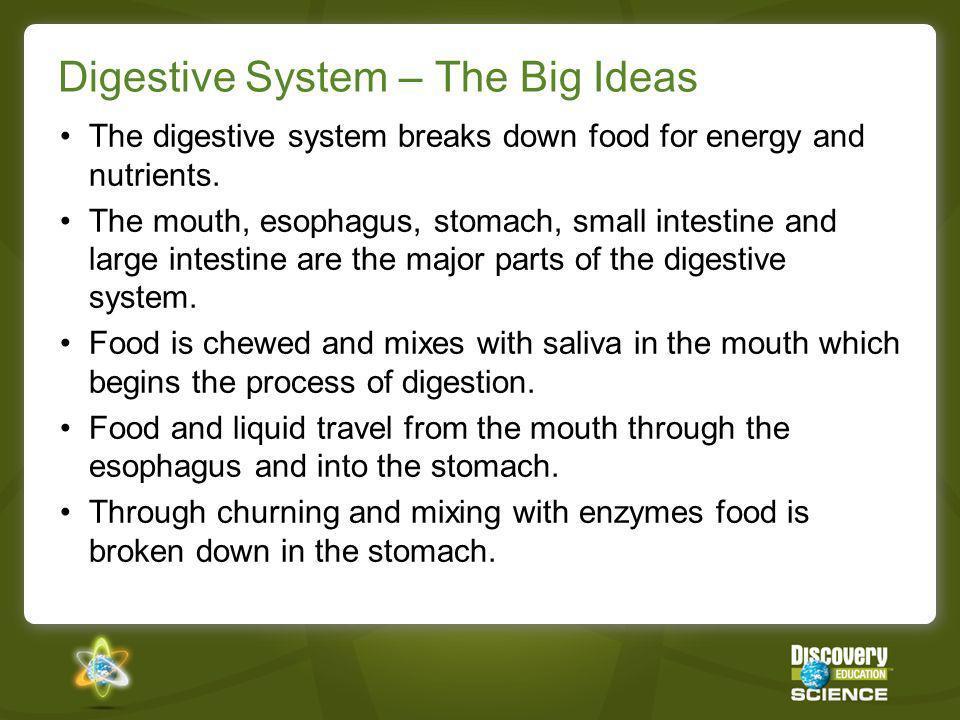 Digestive System – The Big Ideas