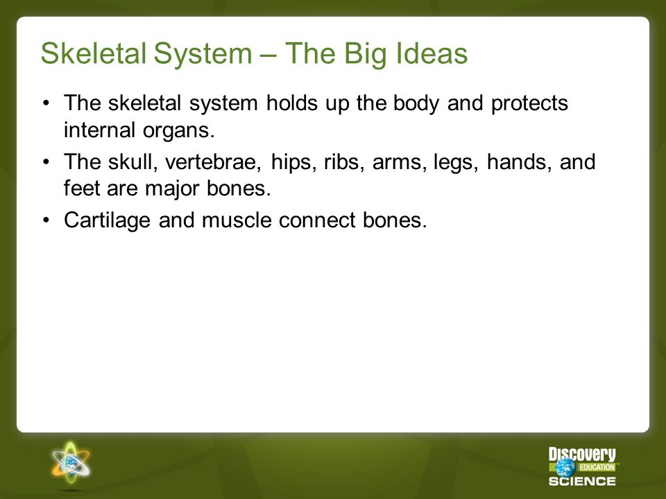 Skeletal System – The Big Ideas