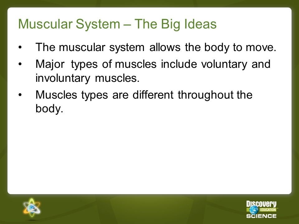 Muscular System – The Big Ideas